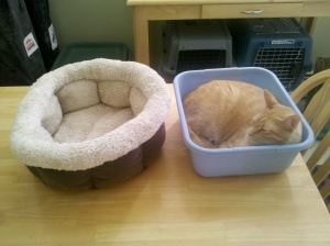 4 out of 5 cats prefer cheap old plastic bucket to soft new plush cat bed.