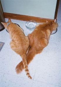 Simba, 3 (L) and Tigger, 4 (R)