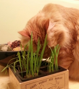 Gourmet Cat Grass. Worth checking out!