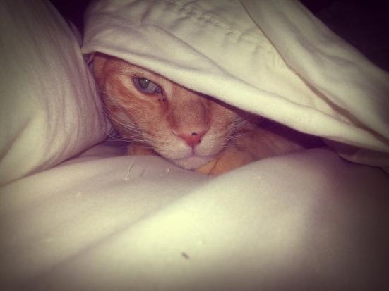 In hiding.